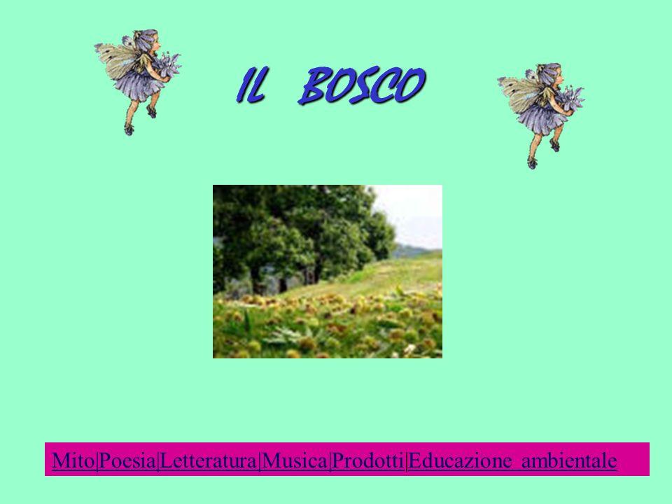 IL BOSCO Mito|Poesia|Letteratura|Musica|Prodotti|Educazione ambientale