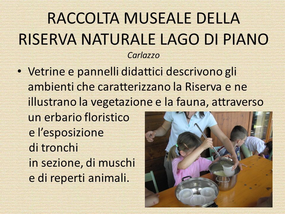 RACCOLTA MUSEALE DELLA RISERVA NATURALE LAGO DI PIANO Carlazzo