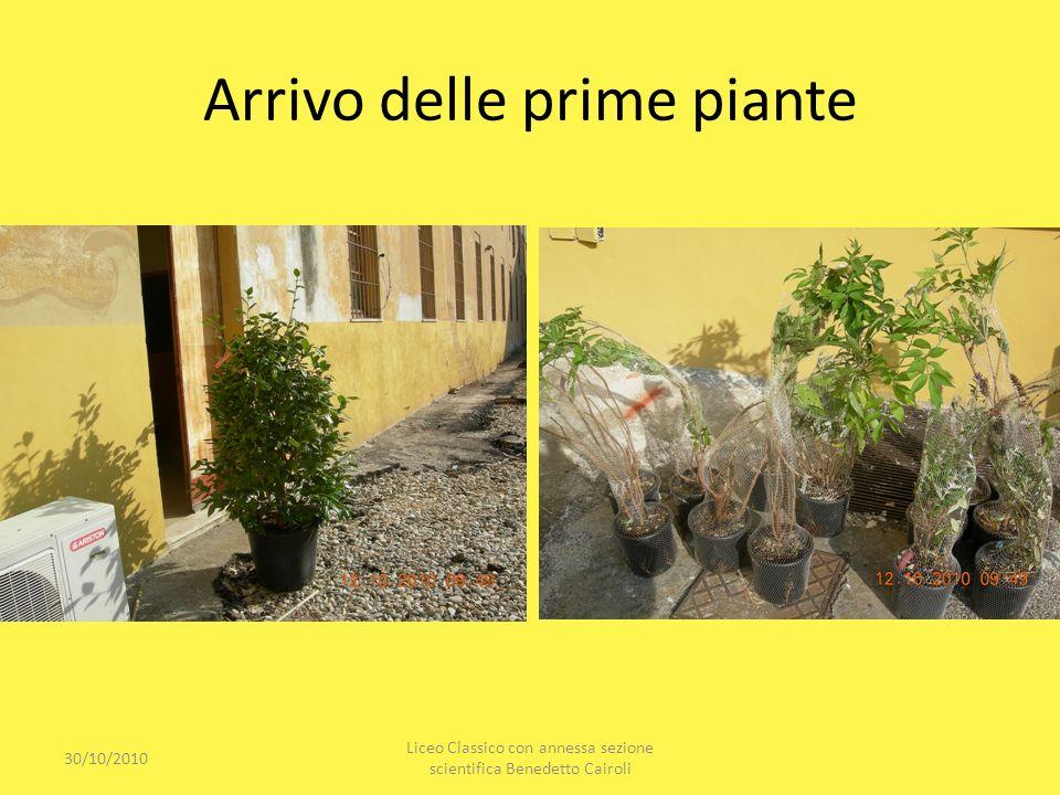Arrivo delle prime piante