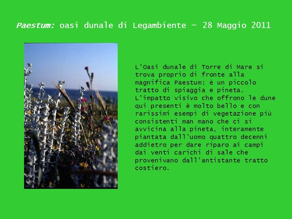Paestum: oasi dunale di Legambiente – 28 Maggio 2011