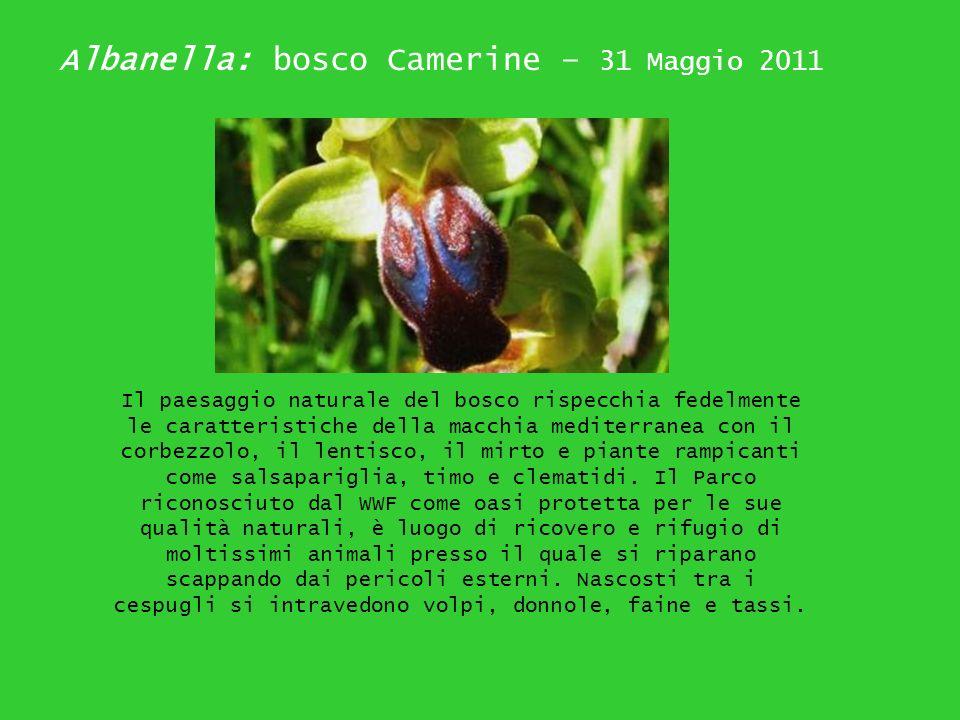 Albanella: bosco Camerine – 31 Maggio 2011