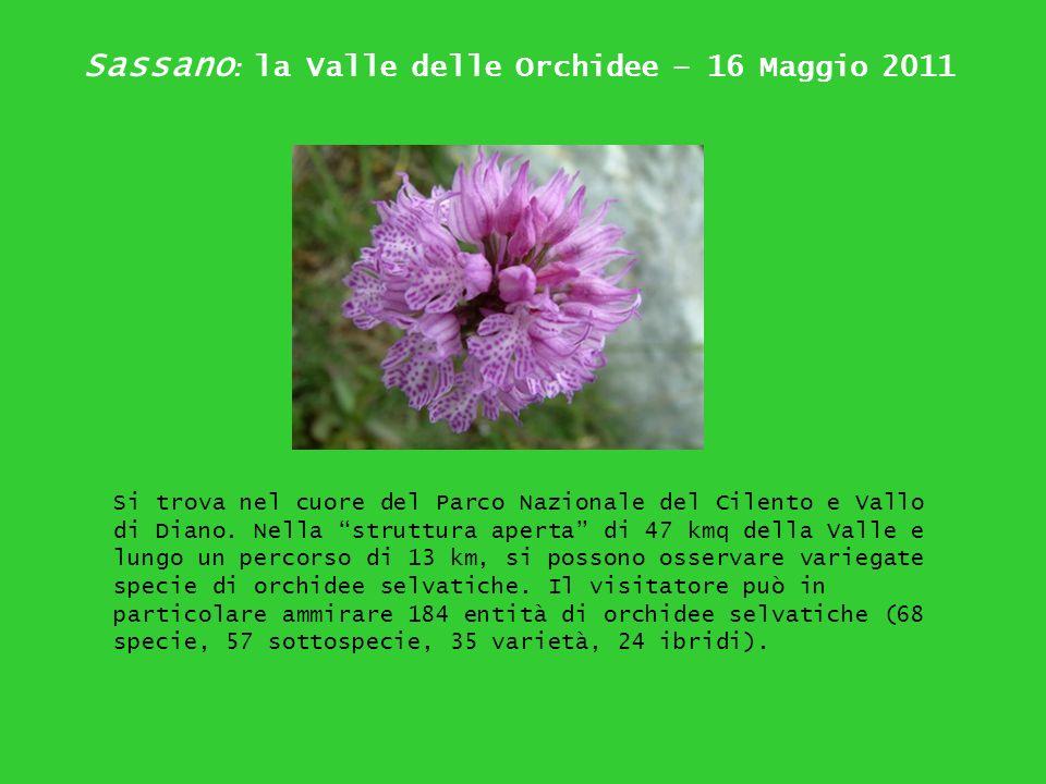 Sassano: la Valle delle Orchidee – 16 Maggio 2011