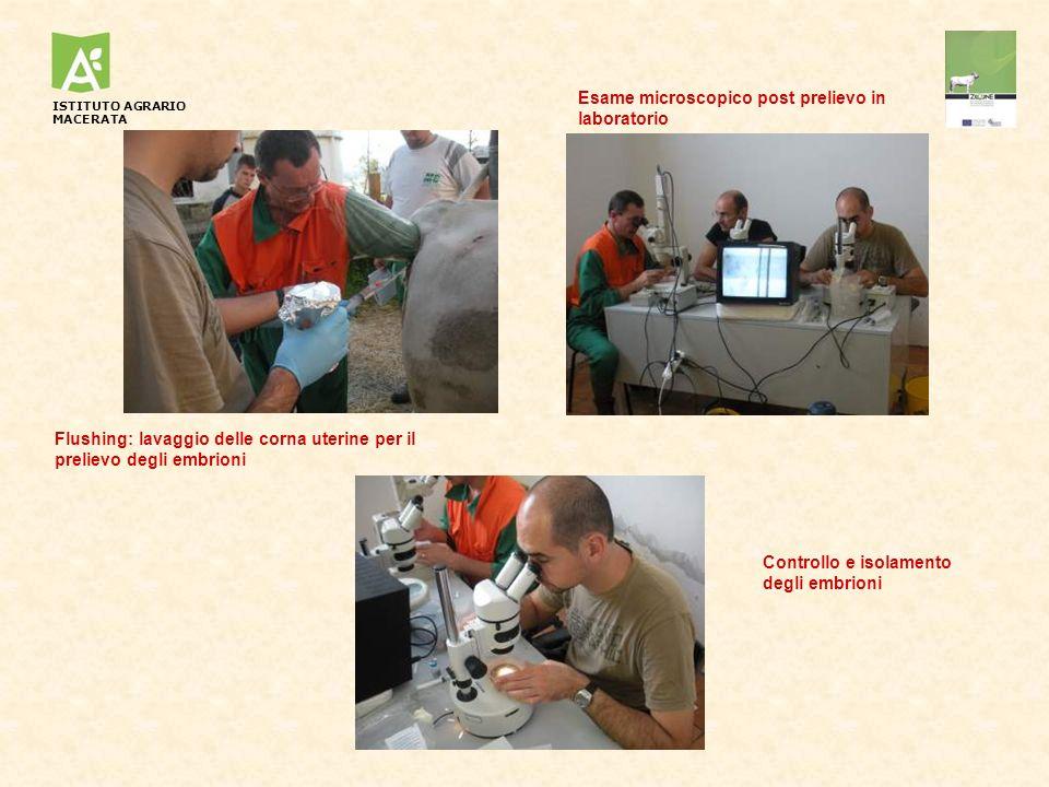 Esame microscopico post prelievo in laboratorio