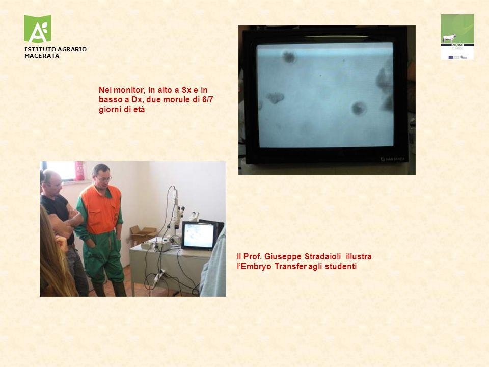 Il Prof. Giuseppe Stradaioli illustra l'Embryo Transfer agli studenti