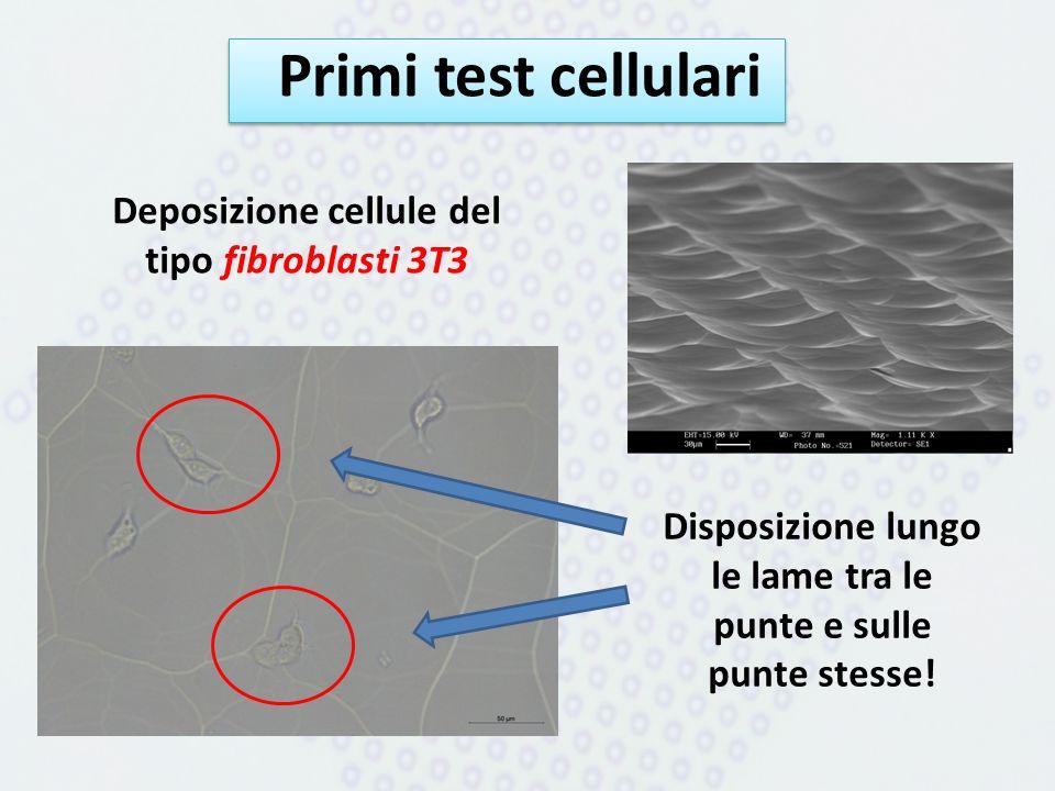 Primi test cellulari Deposizione cellule del tipo fibroblasti 3T3