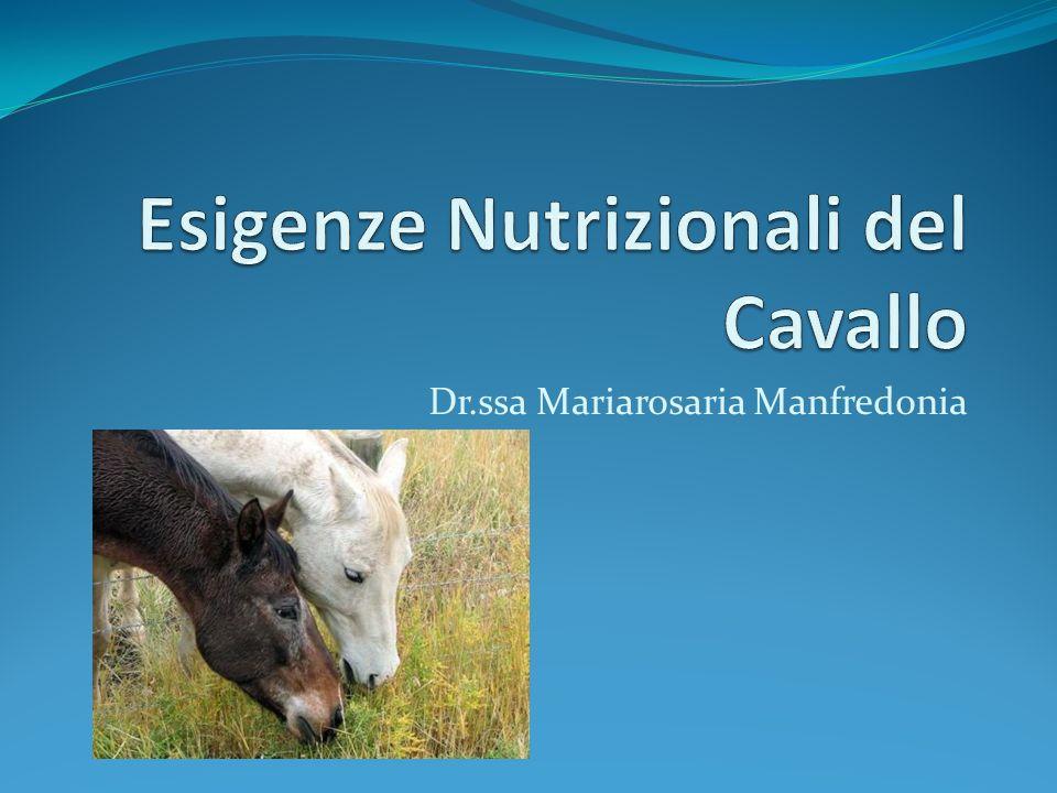 Esigenze Nutrizionali del Cavallo