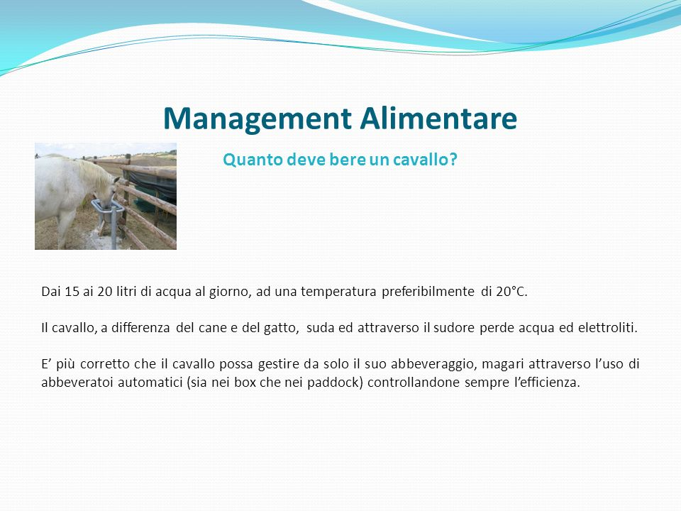 Management Alimentare
