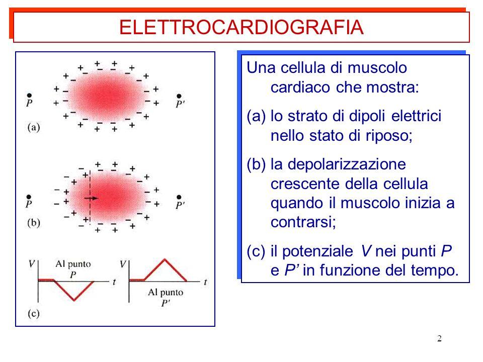 ELETTROCARDIOGRAFIA Una cellula di muscolo cardiaco che mostra: