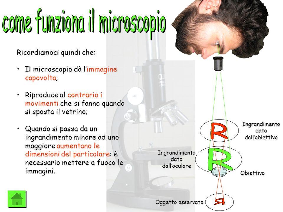 come funziona il microscopio