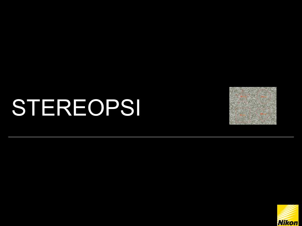 STEREOPSI