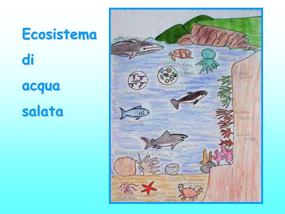 Ecosistema di acqua salata