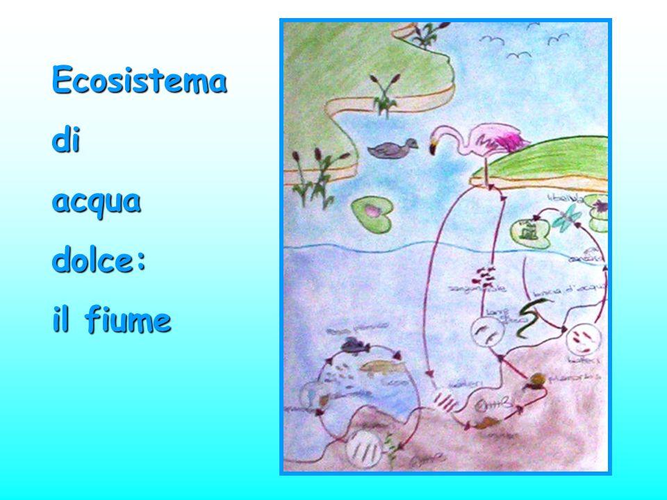 Ecosistema di acqua dolce: il fiume