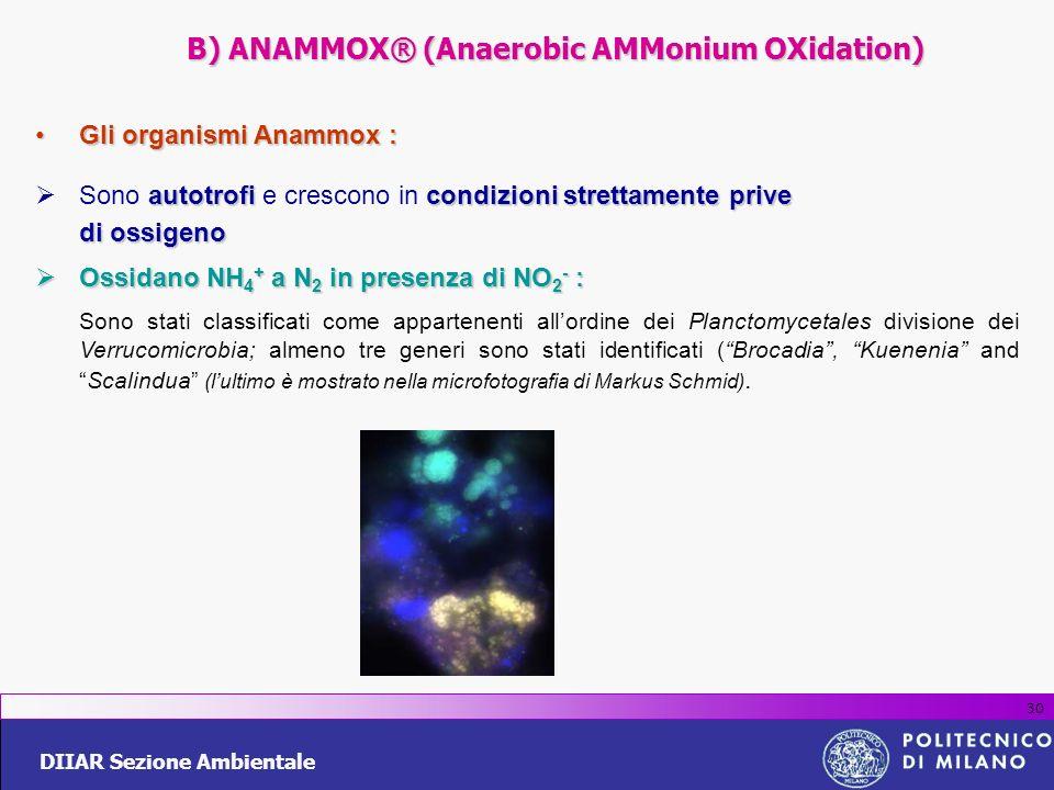 B) ANAMMOX® (Anaerobic AMMonium OXidation)