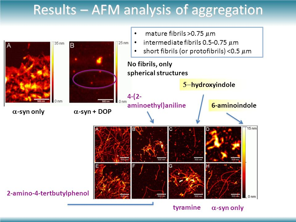 Results – AFM analysis of aggregation