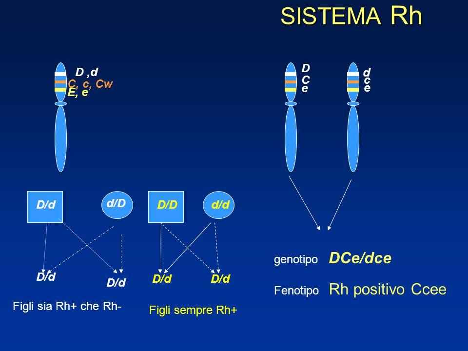 SISTEMA Rh DCe/dce D D ,d d C c C, c, Cw e e E, e d/D D/d D/D d/d