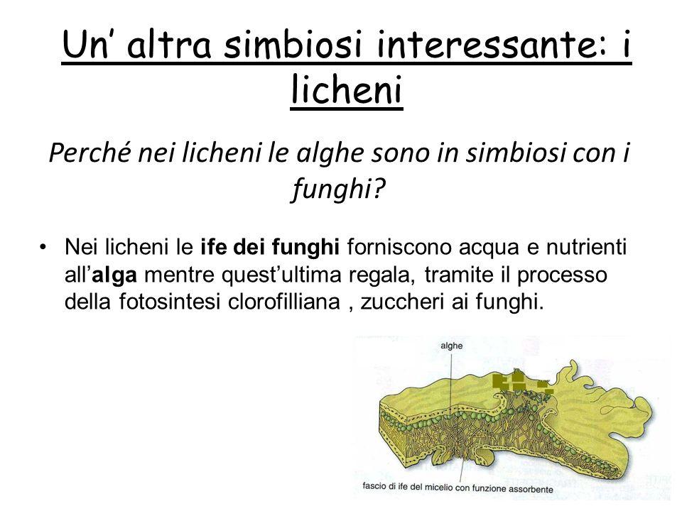 Un' altra simbiosi interessante: i licheni