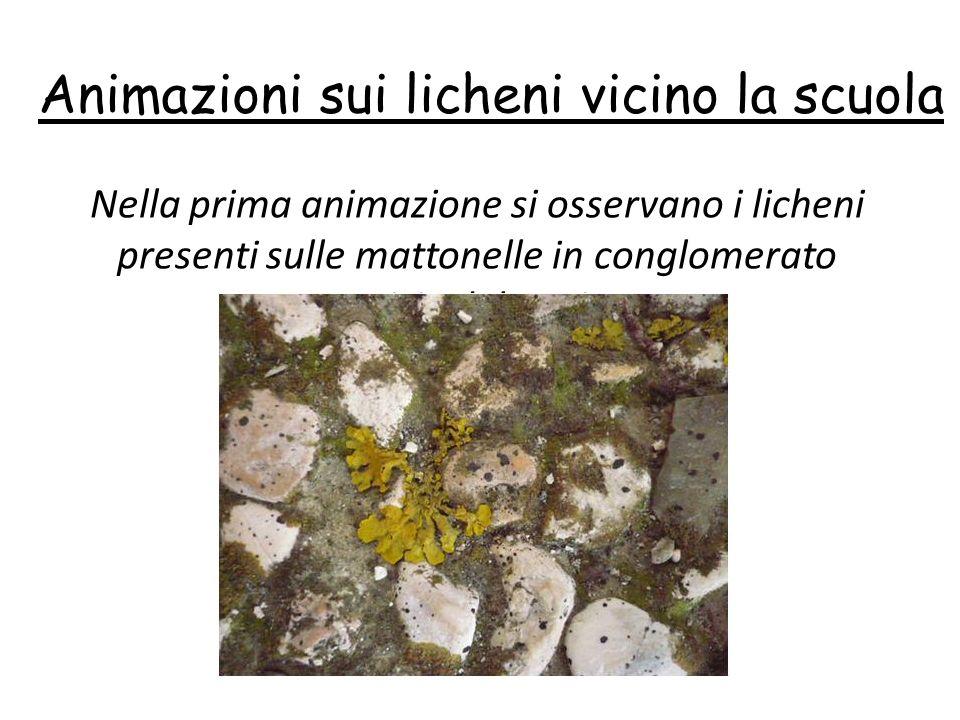 Animazioni sui licheni vicino la scuola
