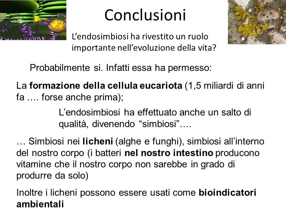 Conclusioni L'endosimbiosi ha rivestito un ruolo importante nell'evoluzione della vita Probabilmente si. Infatti essa ha permesso: