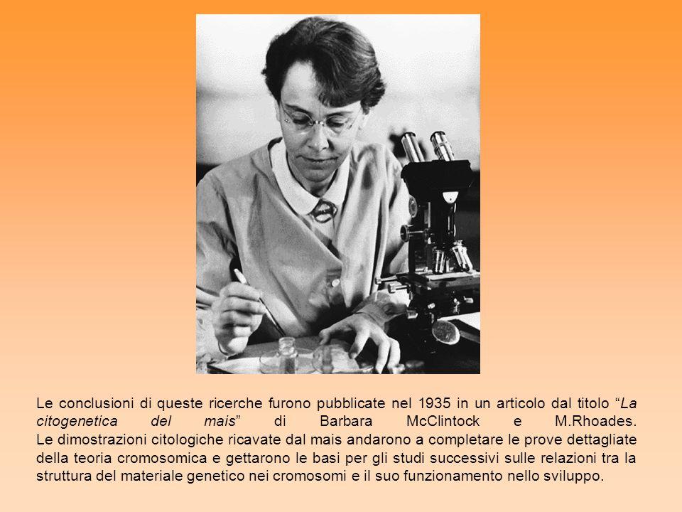 Le conclusioni di queste ricerche furono pubblicate nel 1935 in un articolo dal titolo La citogenetica del mais di Barbara McClintock e M.Rhoades.