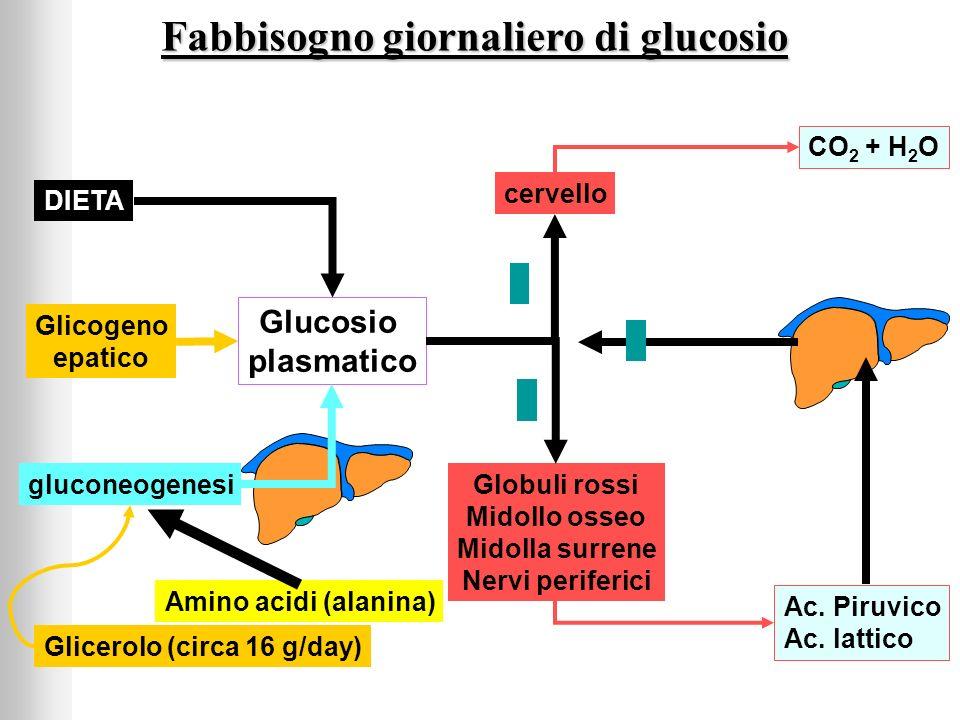 Fabbisogno giornaliero di glucosio