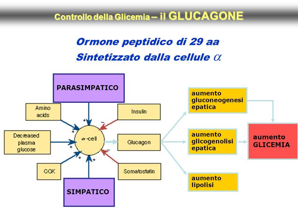 Controllo della Glicemia – il GLUCAGONE
