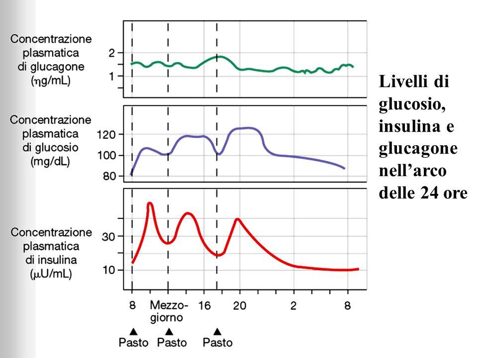 Livelli di glucosio, insulina e glucagone nell'arco delle 24 ore