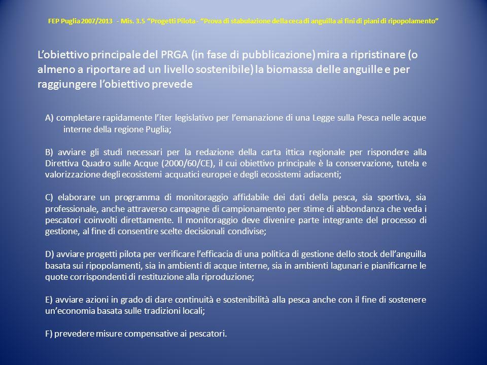 FEP Puglia 2007/2013 - Mis. 3.5 Progetti Pilota - Prova di stabulazione della ceca di anguilla ai fini di piani di ripopolamento