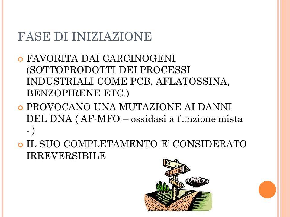 FASE DI INIZIAZIONE FAVORITA DAI CARCINOGENI (SOTTOPRODOTTI DEI PROCESSI INDUSTRIALI COME PCB, AFLATOSSINA, BENZOPIRENE ETC.)