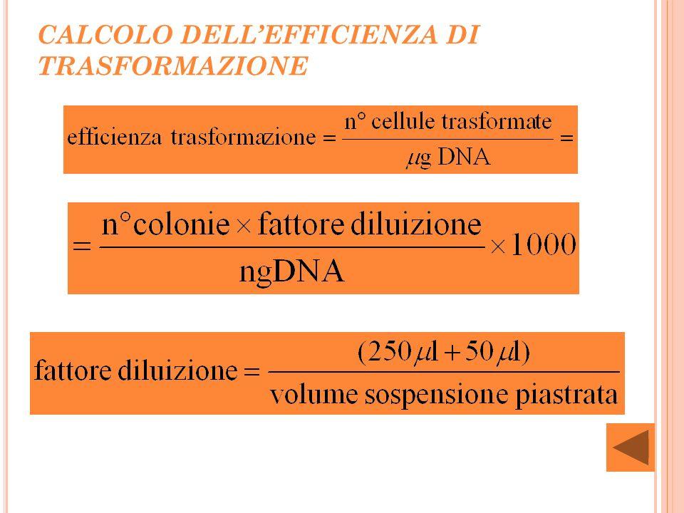 CALCOLO DELL'EFFICIENZA DI TRASFORMAZIONE
