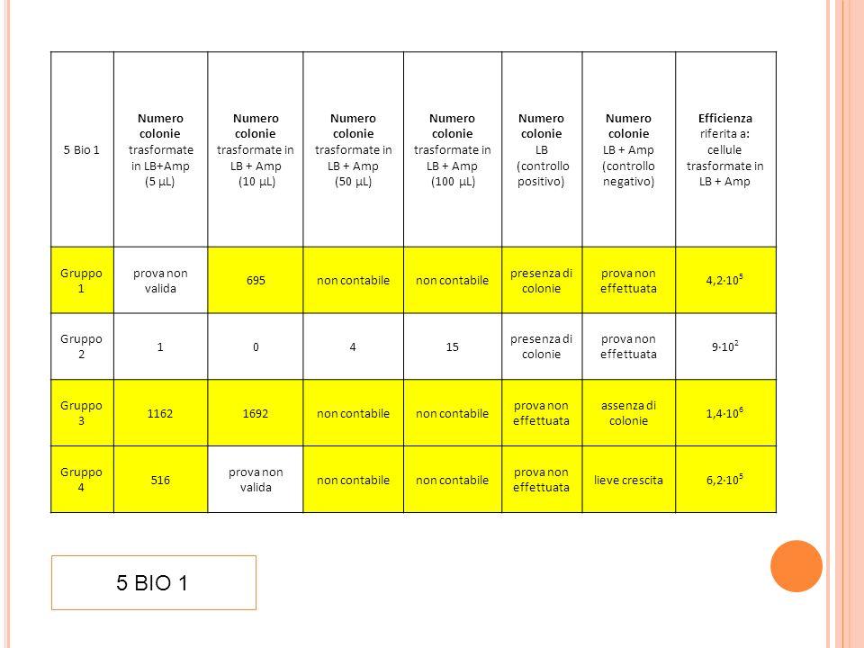 5 BIO 1 5 Bio 1 Numero colonie trasformate in LB+Amp (5 µL)
