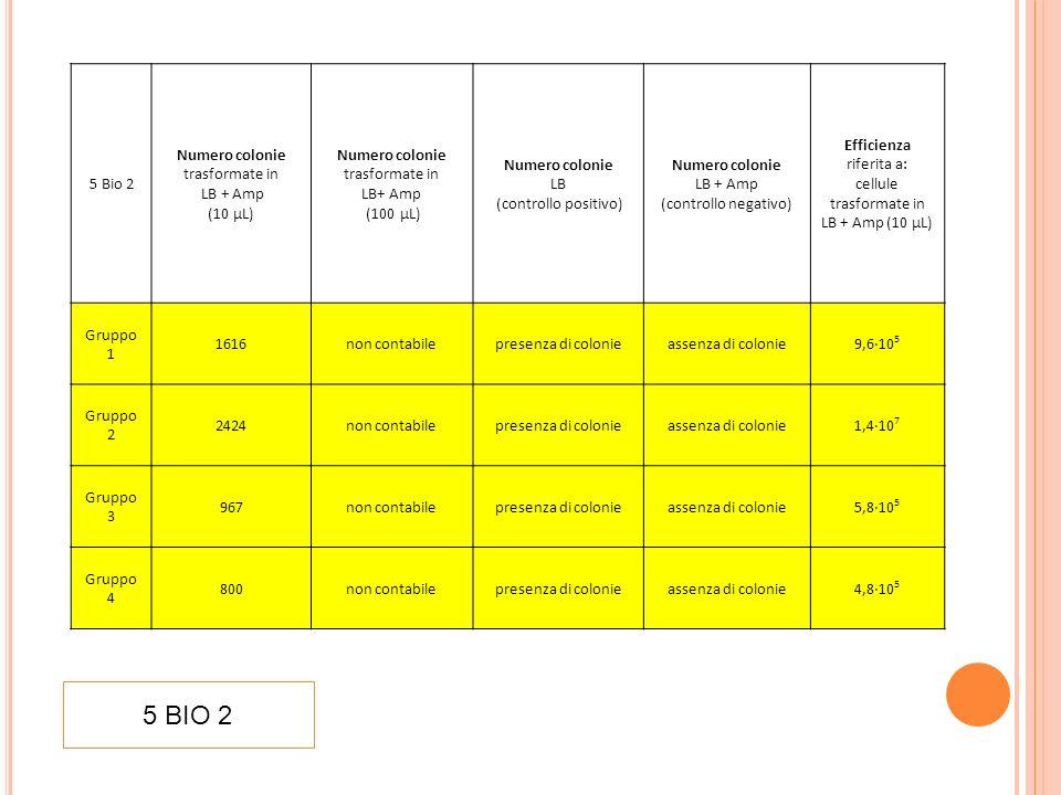 5 BIO 2 5 Bio 2 Numero colonie trasformate in LB + Amp (10 µL)
