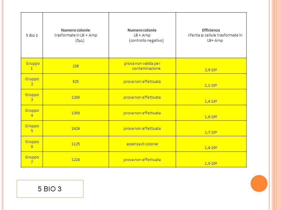 5 BIO 3 5 Bio 3 Numero colonie trasformate in LB + Amp (5µL)