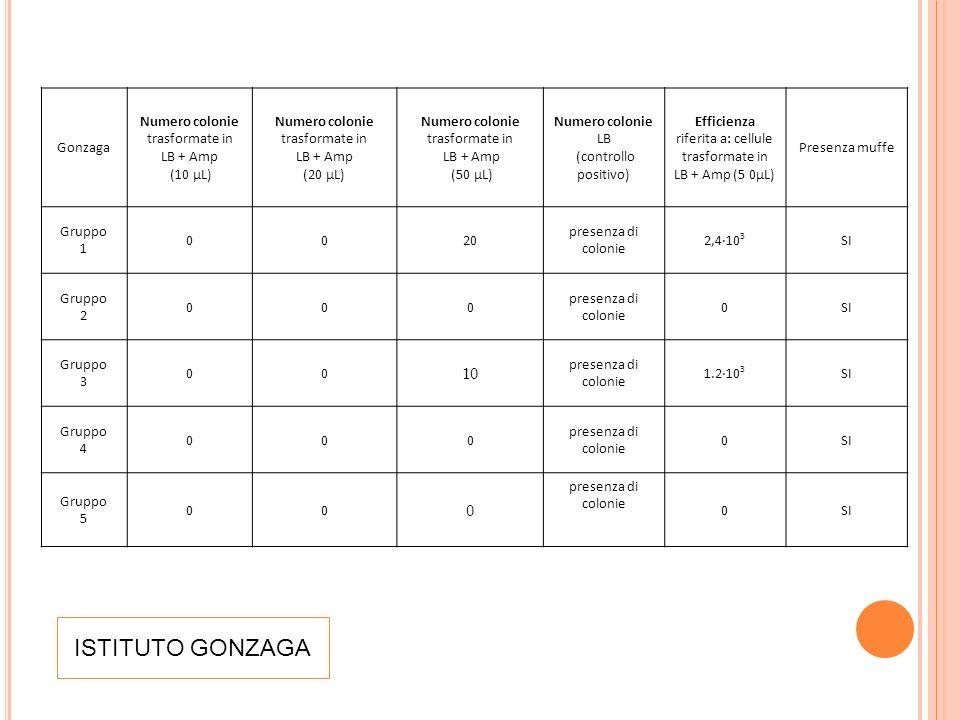 ISTITUTO GONZAGA Gonzaga Numero colonie trasformate in