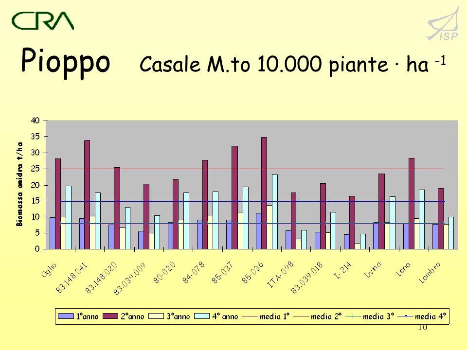 Pioppo Casale M.to 10.000 piante · ha -1