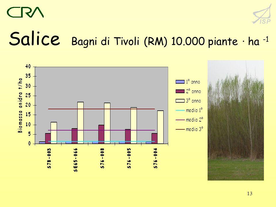 Salice Bagni di Tivoli (RM) 10.000 piante · ha -1