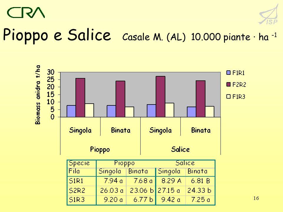 Pioppo e Salice Casale M. (AL) 10.000 piante · ha -1
