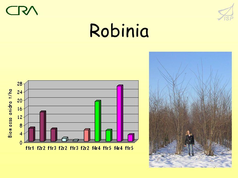 Robinia