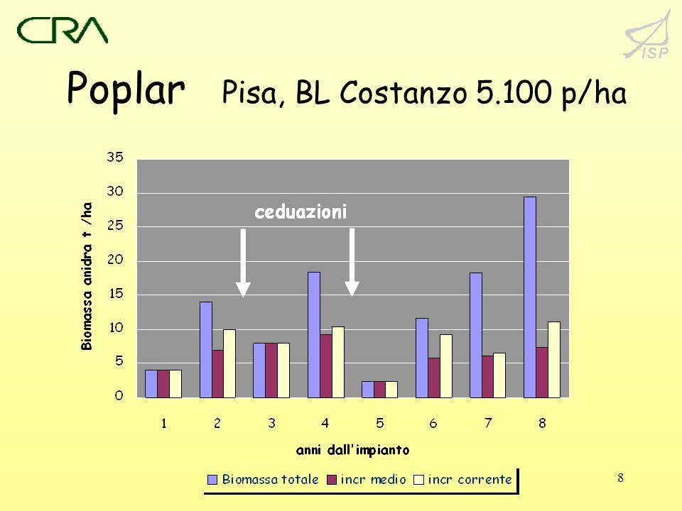 Poplar Pisa, BL Costanzo 5.100 p/ha