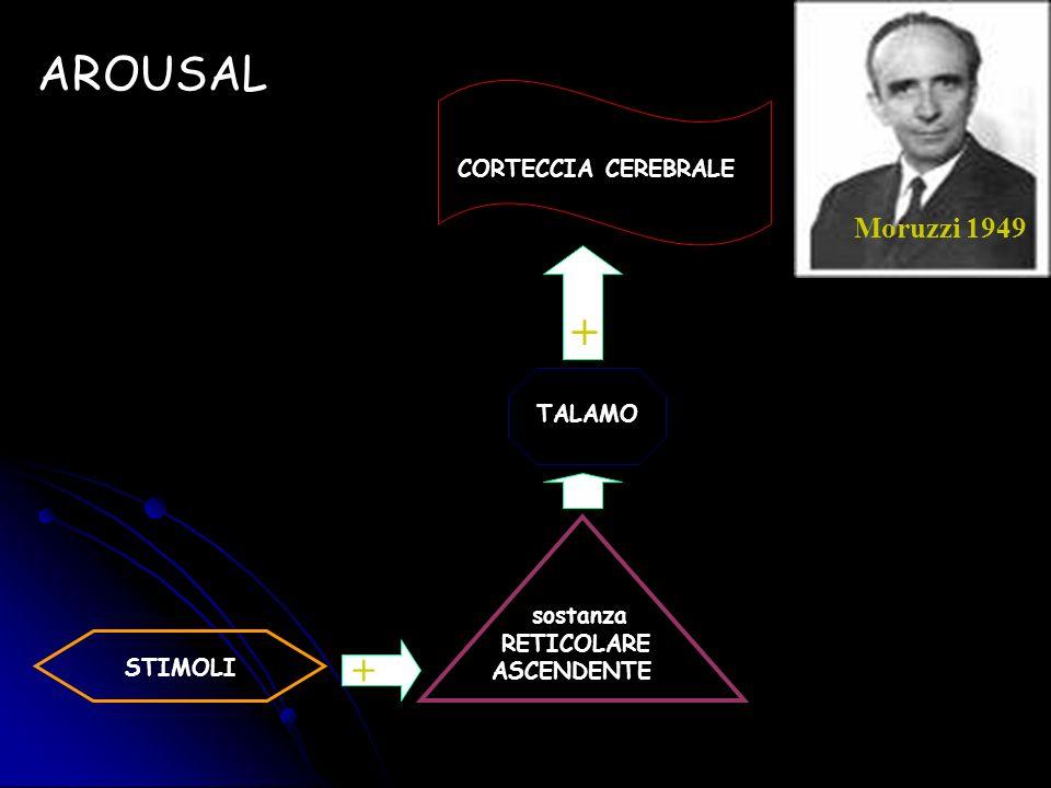 AROUSAL + + CORTECCIA CEREBRALE Moruzzi 1949 TALAMO sostanza