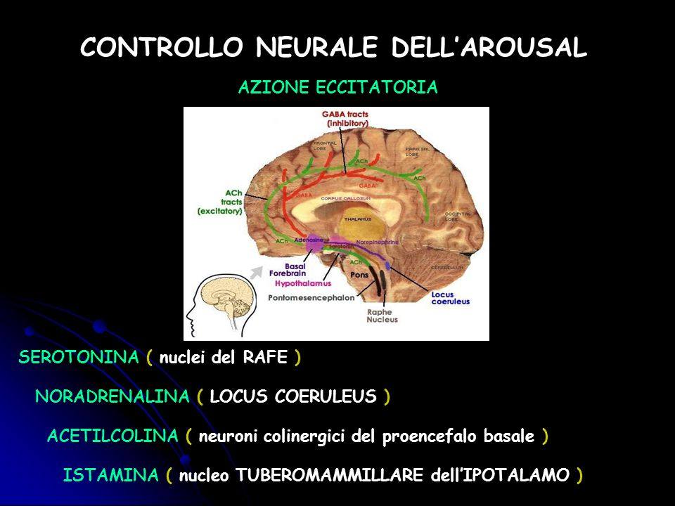 CONTROLLO NEURALE DELL'AROUSAL