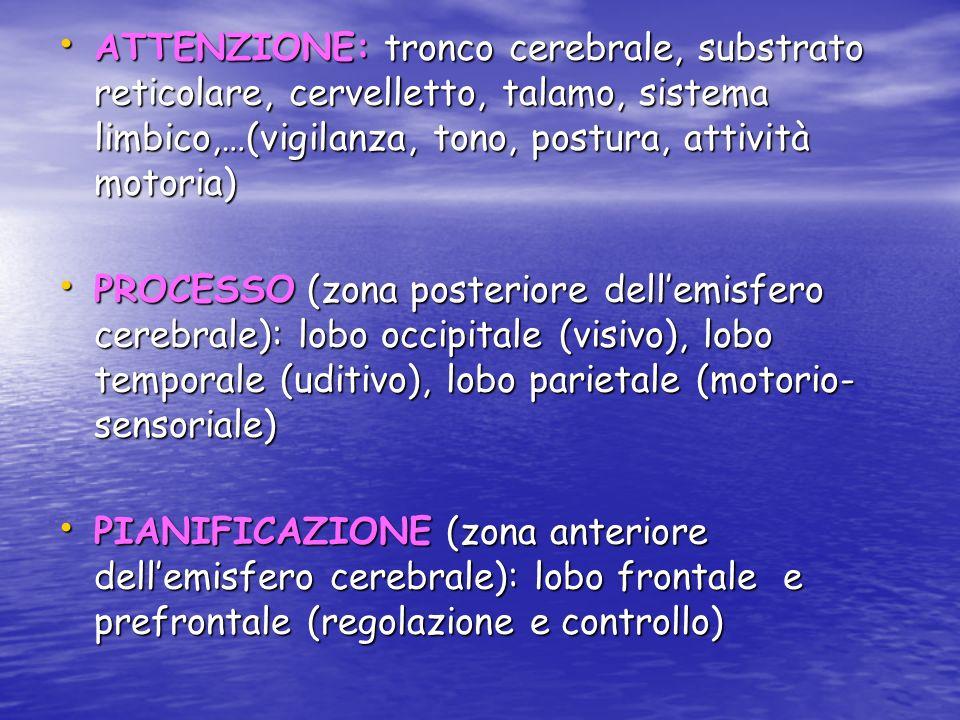 ATTENZIONE: tronco cerebrale, substrato reticolare, cervelletto, talamo, sistema limbico,…(vigilanza, tono, postura, attività motoria)