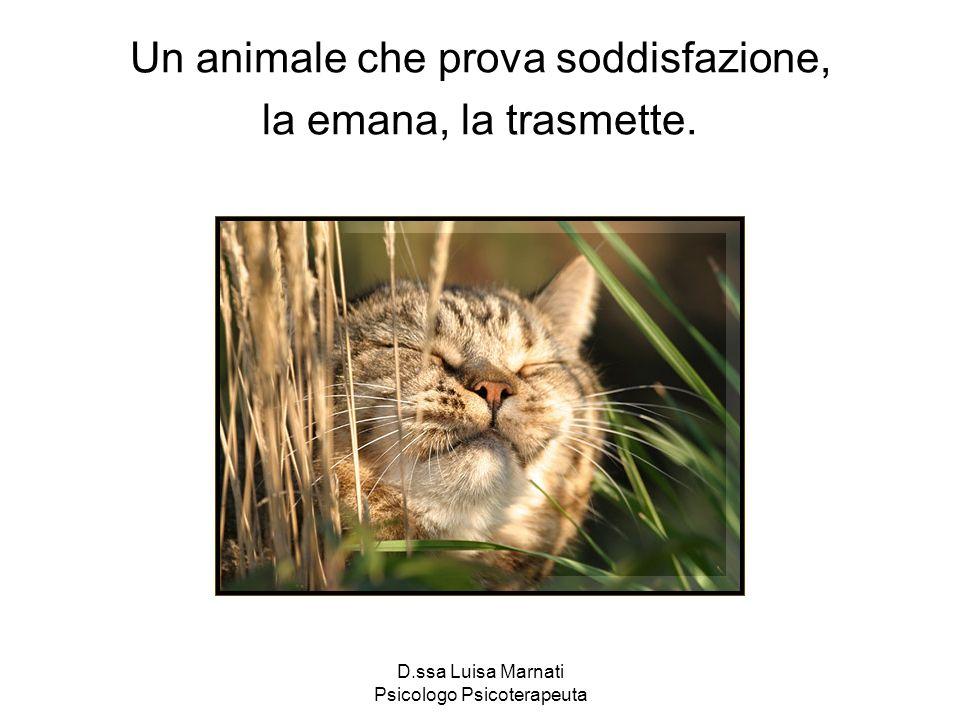 Un animale che prova soddisfazione, la emana, la trasmette.