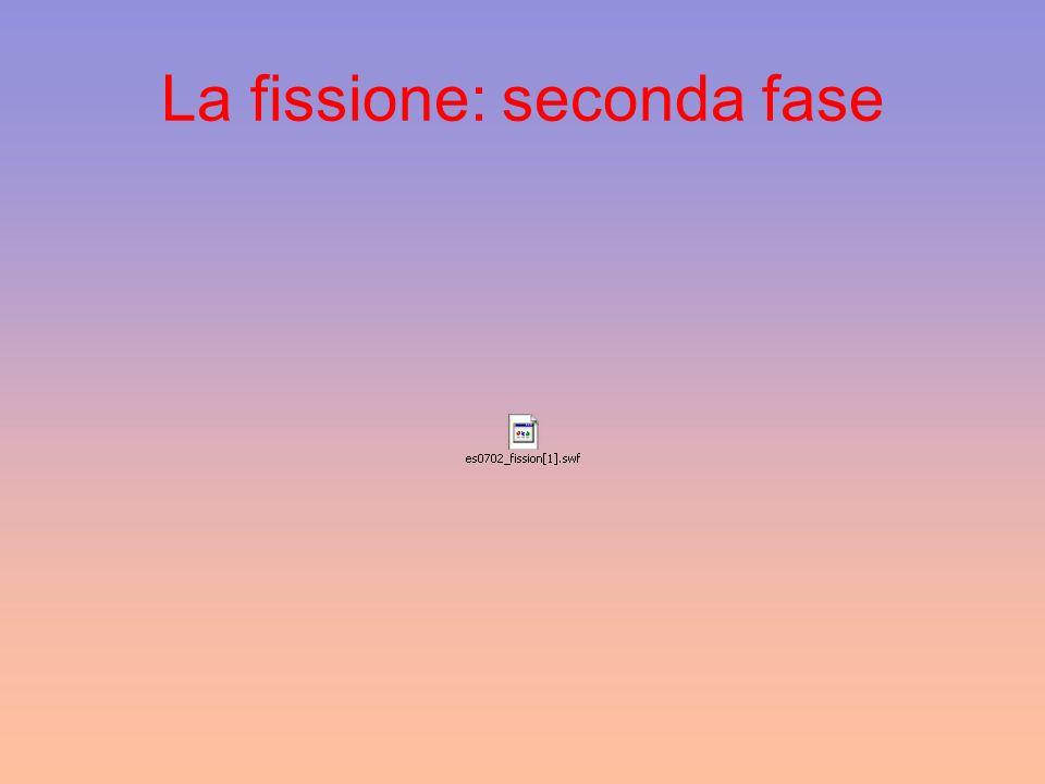 La fissione: seconda fase