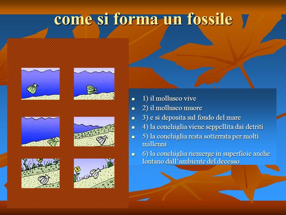 come si forma un fossile