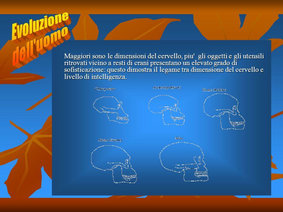 Maggiori sono le dimensioni del cervello, piu gli oggetti e gli utensili ritrovati vicino a resti di crani presentano un elevato grado di sofisticazione: questo dimostra il legame tra dimensione del cervello e livello di intelligenza.