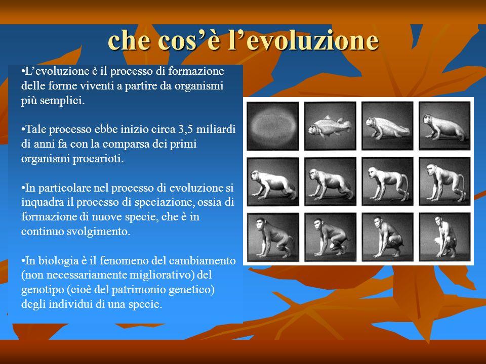 che cos'è l'evoluzione