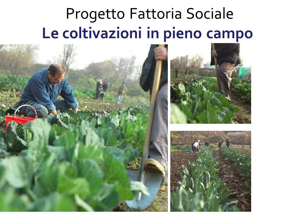 Progetto Fattoria Sociale Le coltivazioni in pieno campo