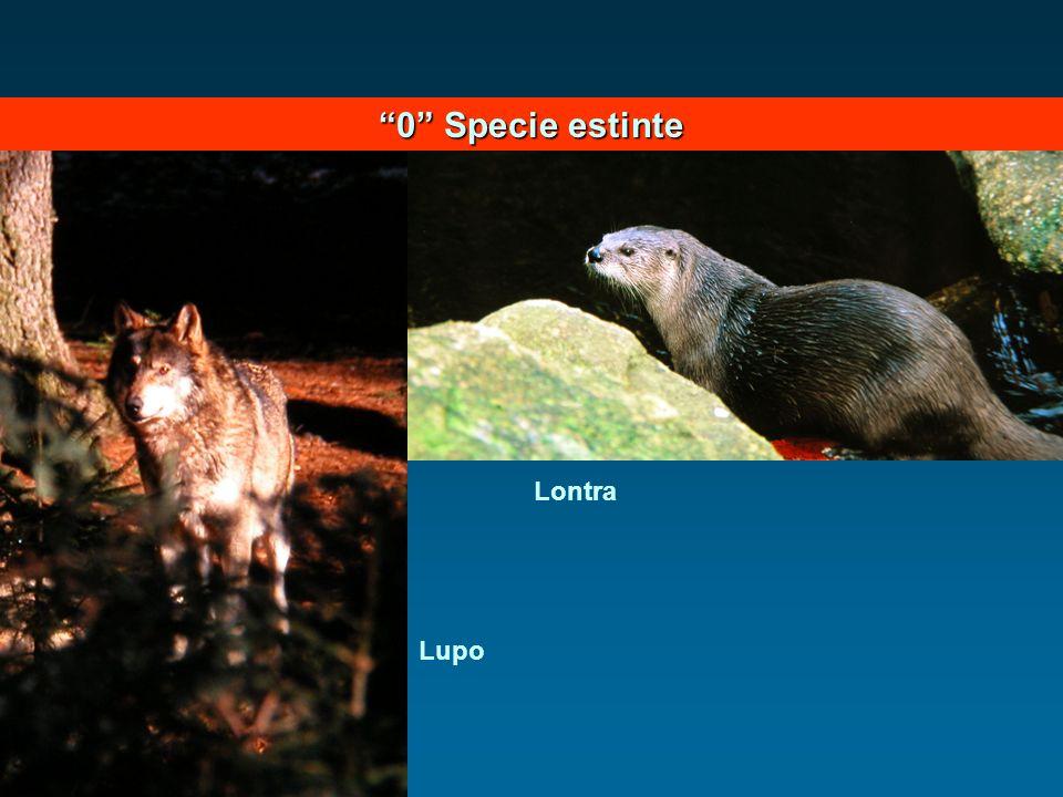 0 Specie estinte Lontra Lupo