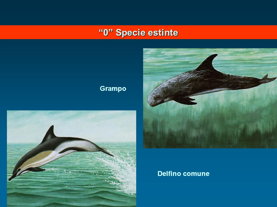 0 Specie estinte Grampo Delfino comune