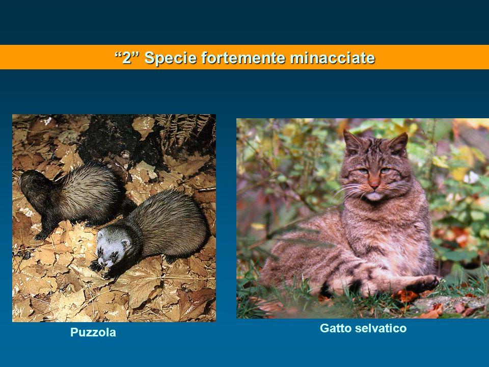 2 Specie fortemente minacciate